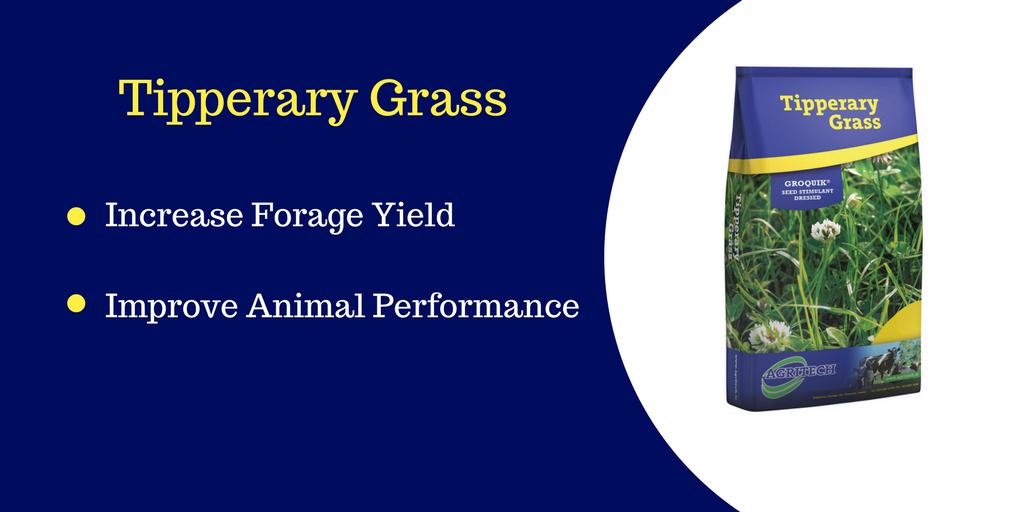 tipp-grass