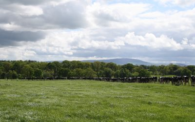 Reseeding – Deciding what approach works best