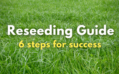 Reseeding Guide – 6 steps for success