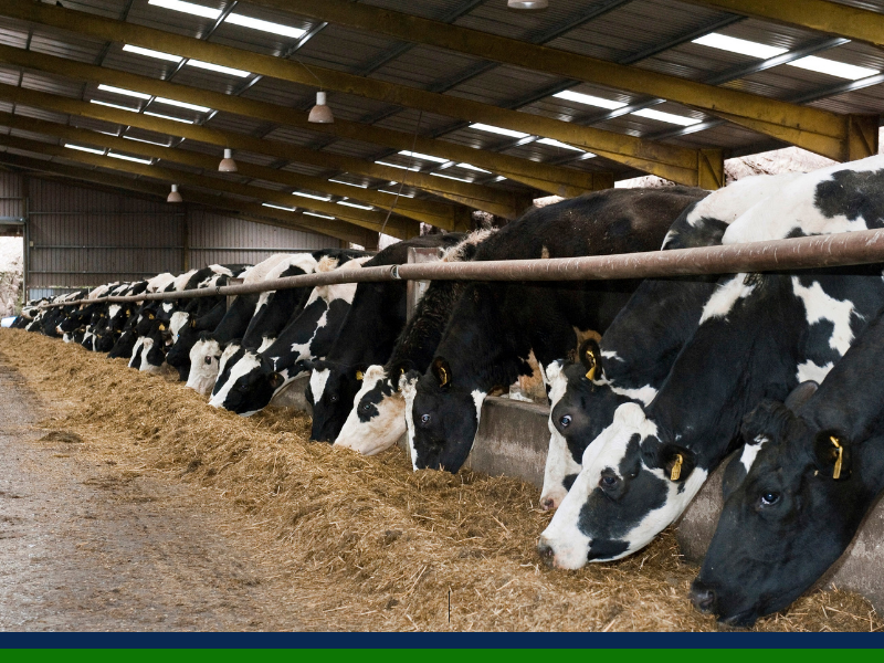 Maintaining a healthy rumen this winter